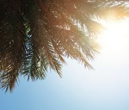 Palm background with sky and sun light.  royalty free stock image