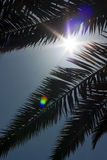 Palm, on the background of sky. Sunny Day Royalty Free Stock Image