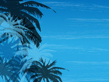 Palm background. Vector illustration of abstract background with palm Royalty Free Stock Photos