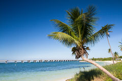 Palm at Bahia Honda Beach Stock Photos