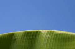 Palm, Banana Leaf Royalty Free Stock Photography