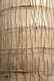 Palm bark stock photography