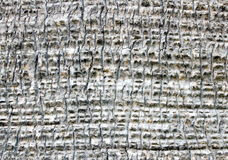 Palm bark Stock Photos