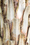 Palm bark. With brown texture royalty free stock photo