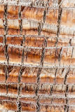 Palm bark Royalty Free Stock Photography