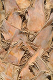 Palm bark, texture, background Royalty Free Stock Image