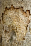Palm Bark Texture Stock Photo