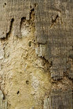 Palm Bark Texture Stock Images