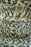 Palm Bark Texture Stock Photography