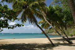 Palm beach. Beach on St Lucia- Caribbean,West Indies Royalty Free Stock Images