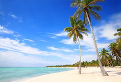 Palm and beach. Great beach and palms in dominican republic Stock Photography