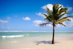 Palm on beach Stock Image