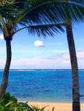 Palm Beach Fotografie Stock