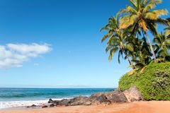 Palm beach. Palm tree beach with blue sky and golden sand Royalty Free Stock Image
