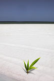 Palm on the beach. Young palm plant on the beach Stock Photo