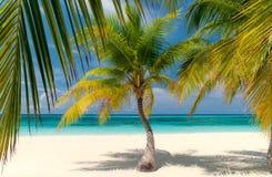 Palm Beach Images libres de droits