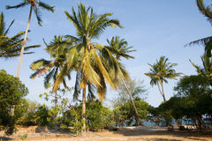 Palm Beach. At Tanzanian Coast Stock Photos