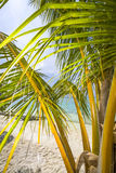 Palm at the beach Stock Images