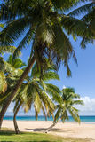 Palm beach Stock Image