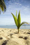 Palm on the beach Stock Image