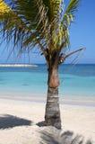 Palm on the Beach. Palm on a Tropical Beach Stock Photos