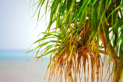 Palm on a Beach Royalty Free Stock Photo