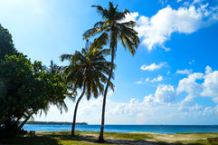 Palm Beach Royalty Free Stock Photo