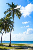 Palm Beach Fotografia Stock