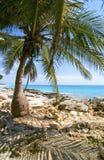 Palm Beach Foto de Stock