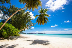 Palm and beach Royalty Free Stock Photos