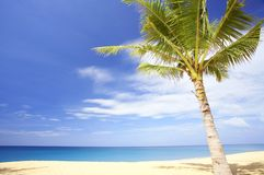 Palm on beach. View of nice tropical empty sandy beach with some palm royalty free stock image