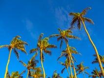 Palm Beach Fotografia de Stock Royalty Free
