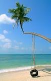Palm on a beach Royalty Free Stock Photos