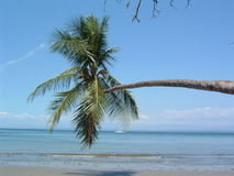 Palm in the beach. Of Costa Rica Stock Photos