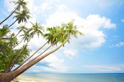 Palm beach Royalty Free Stock Images