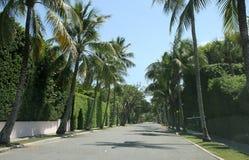 Palm Beach Royalty-vrije Stock Foto
