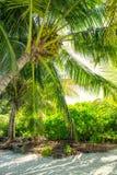 Palm Beach Immagini Stock Libere da Diritti