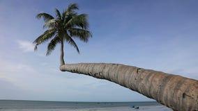 Palm and beach. Alone coconut palm tree on the beach on the background of blue sky. Mui Ne, Vietnam stock video