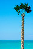 Palm and beach Royalty Free Stock Photography