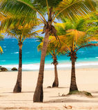 Palm beach Stock Images