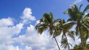 Palm Beach Cayo Levantado som är karibisk. Beträffande dominikan Arkivbild