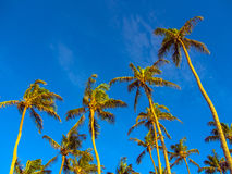 Palm beach Royalty Free Stock Photography