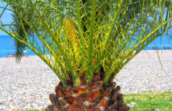 Palm on the Beach Royalty Free Stock Photos
