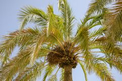 Palm Beach Garden in Benidorm Spain stock photos