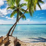 Palm Beach i den Saona ön, Dominikanska republiken Arkivbild
