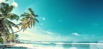 Palm Beach i tropiskt paradis royaltyfri fotografi
