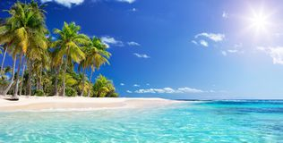 Free Palm Beach In Tropical Paradise Stock Photo - 116201570