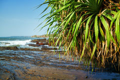 Palm on the beach. Royalty Free Stock Photos