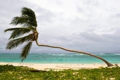 Palm on the beach island Stock Photos