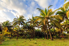 Palm beach landscape Royalty Free Stock Photo